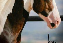 Horses / by Derrick Ramsey