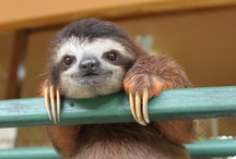 sloths, sloths, and more sloths / by Lisa Rogak
