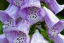 Flower Garden / by Heather Bunnell