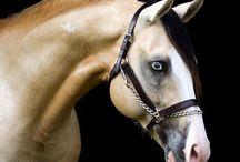 Equine / by Megan Leo