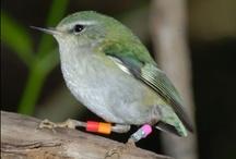 Favourite NZ Birds / by Anchorage Motel Apartments, Te Anau, NZ