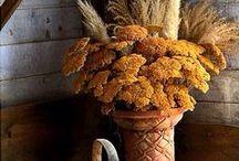 Autumn - Otoño / by Delia Padilla Wenneker
