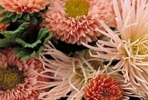 flora, flora, flora, FLORA!!! / flowers & greenery / by aly english, designer