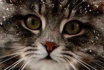 Precocious Pets / by Sunshine Thibodeaux