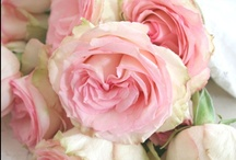 ♥ Beautiful Roses / by Zenobia Klitzke