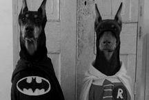 Free as a dog / by Disfraces Jarana