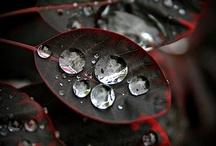 Gotitas-lluvia / by Lupe Ayllon Menoyo