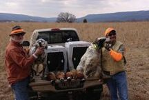Bird Hunting Success Pics / by Lion Country Supply