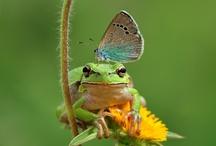 Bichos / Que inexplicable multitud, que asombrosa diversidad de insectos nos cercan por todas partes. Insectos en el aire, en el agua, en las plantas, en los animales, en las piedras, insectos en otros insectos....Pero no obstante todos hallan el sustento cotidiano. Y cuanto no brilla la sabiduría del Creador en el modo con que se le da?  A todos les suministra los alimentos que le son propios.....mas si Dios tiene tanto cuidado de los brutos destituidos de razón..Que no hará en beneficio de los hombres? / by Myrna Vigliante