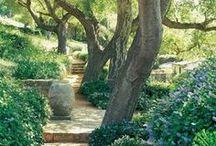 California Native Gardens / by Peter Veilleux