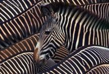 Amazing Animals / by Villa Semadhi Pemuteran Bali
