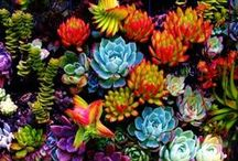 flower - Fleur - Nature / Flower - fleur - sauvage - nature - foret - vegetable - vegetal  / by ☪ Forget Me Not Studio ☪