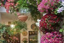 My Secret Garden Ideas / by Sandy Wilson
