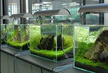 Aquascaping/Aquarium / This board is dedicated to the art of aquascaping and the general hobby of aquarium keeping. / by Pearlsnap Jenkins