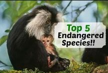 Animal Conservation / These beautiful animals from all around the world need your help to survive. On this board we'll show you these endangered species, their habitats and tell you what you can do to make a difference / by Ample Earth