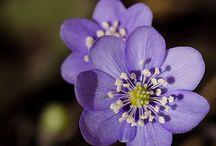 flowers / by Emily Cornelius