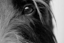 doggies / by mary McCarthy