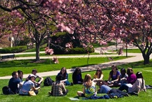 Student Life / by Fairfield University