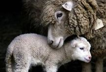Our Wooly Friends / by knotsewcute