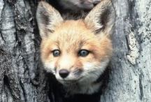 I Want A Fox! / by Happy Tiah