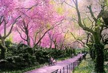 Spring / by Babylon