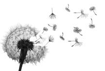Things that grow :-)  / Greenery, Flowers, Veggies, Herbs... / by Julie Reynolds Forrest