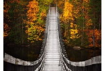 Fall for It ! :D / by Julie Reynolds Forrest