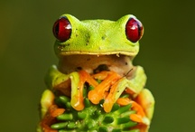 Hip Hop / frogs & toads / by Kimberly Hoblet