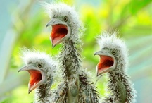Baby Animals / by Kimberly Hoblet