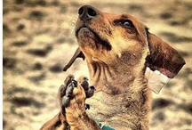 Dog Days / devoted to dogs / by Kimberly Hoblet