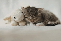 Sleepy Time / babies and their sleeping buddies / by Kimberly Hoblet