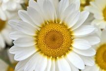 Flowers... / by Weezer Wisdom