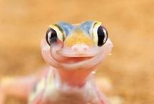 Reptilia & Amphibia / by Selina Williams