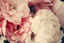 Flower / by Annabinbin Yang