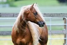 God's Wild Animals: Horses / by Celina Hidalgo