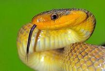 Snakes / by Jackie Atkinson