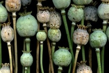 Plants / Plants & flowers in every form ...  / by Maj Nielsen