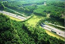 Eco Design / Innovative and environmentally friendly design / by Santé