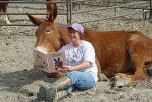Donkeys Mules Zebra & Other Equidae / by Norine Helms