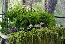 Gardening and outdoor space ideas / by Sheila Beninati Design