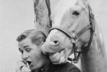Famous Horses / by Providence Hill Farm
