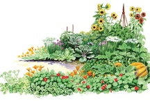 Garden and Homestead Illustrations / Elayne Sears has been an illustrator with Mother Earth News for years, frequently working with contributing editor Barbara Pleasant. We love the additional insight into the garden her illustrations provide.  / by MOTHER EARTH NEWS