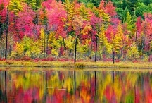 Fall Beauty / by Lavern Schroeder