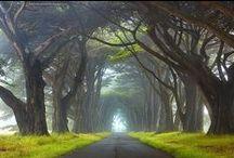 Amazing Nature / by Karinna Zarate