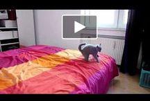 Fun Cat Videos / by Cat Faeries