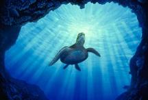 Deepest Ocean Blue / by Rachel Akau