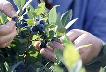 Growing Fruits / by Andrea Bassett