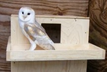 Barn Owl Nestboxes / by BarnOwl Trust