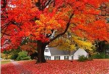 Fall / by judy jefferson
