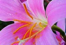!   ~  Flowers  ~   ! / by Neusa Fujimoto